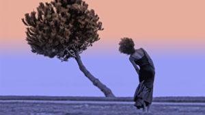 pianta-vento